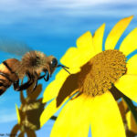Honeybee Policy Should Use Facts not Alarmism