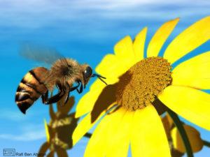 honeybee_photobucket