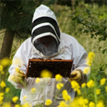 Beekeeper Rejects Anti-Pesticide Campaign