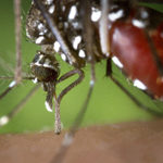 Attack on Pesticides Could Increase West Nile Virus Risk