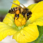 Honeybee Health and Headlines
