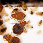 Josh Bloom Interview: Pesticides and Bedbugs