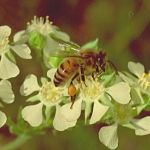 Green Agenda on Bees