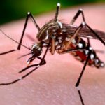 Fight Zika with Regulatory Reform
