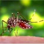 Zika And Spurious Associations